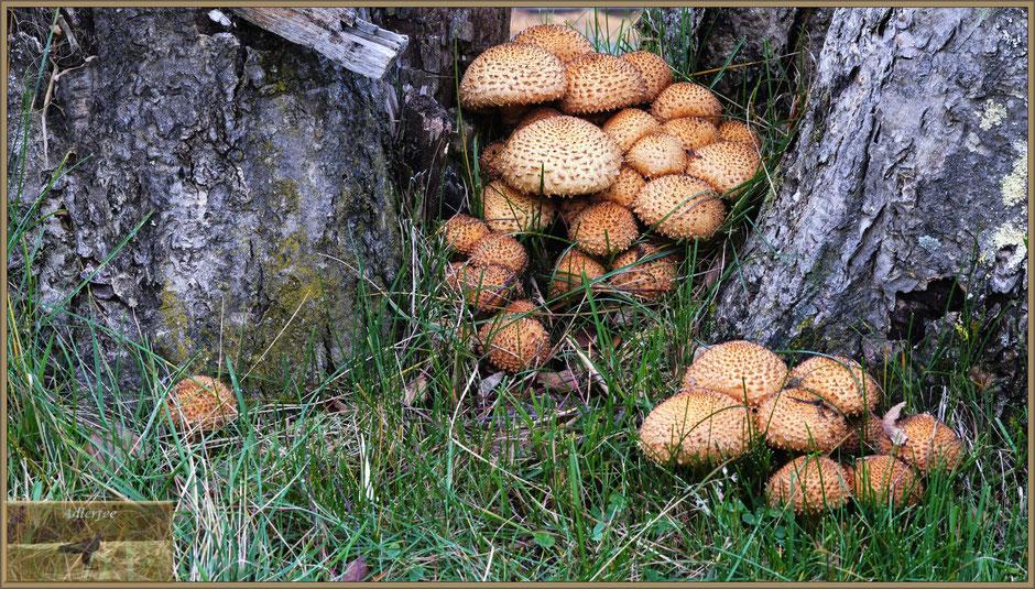 menschundnatur-unserezukunft, birke, pflanzen, pilze