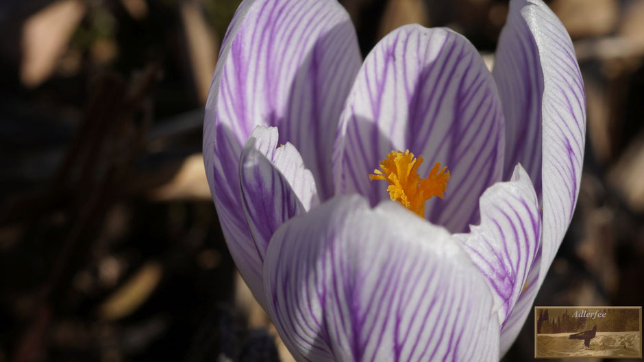 MenschundNatur, Blumen, Frühling