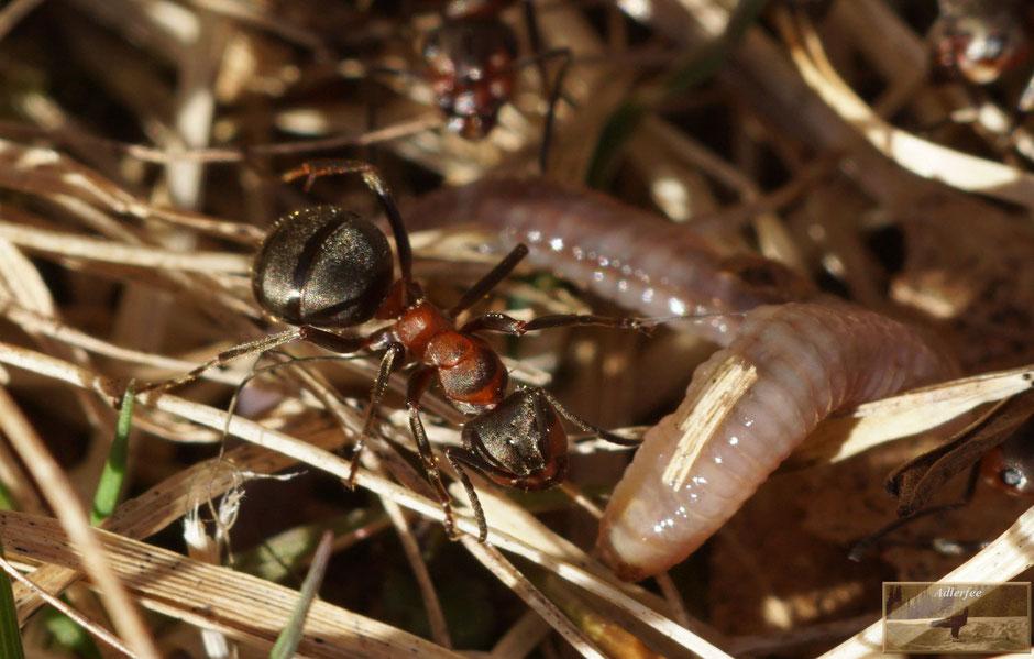 MenschundNatur, Ameisen, Frühling
