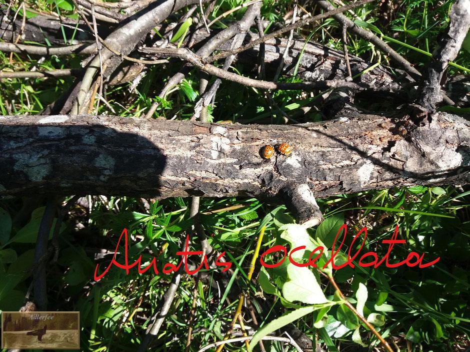 menschundnatur-unserezukunft, marienkäfer, insekten