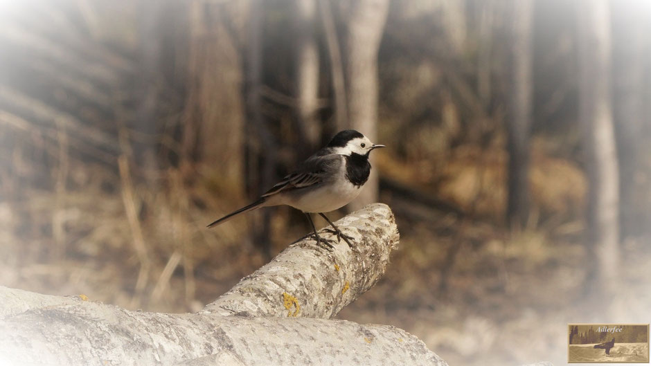 MenschundNatur-unsereZukunft, Singvögel