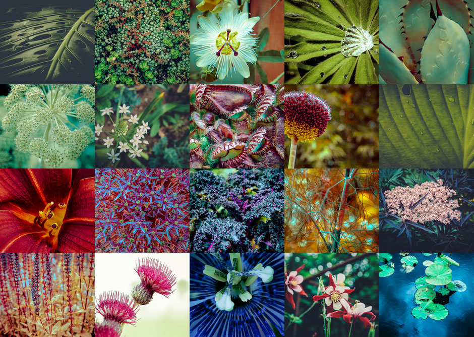 fleur,vegetal,pistil,festival des jardins,jardin,chaumont,loir et cher , 41