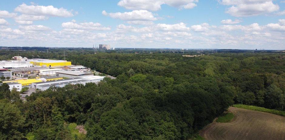 Der Romberger Wald ist seit jeher ein beliebtes Naherholungsgebiet für die Rünther Bevölkerung. (Drohnenfoto: Manuel Izdebski)