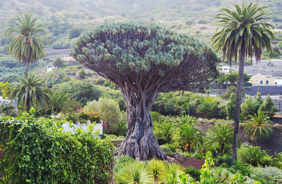 Baum, Teneriffa, Charter, Katamaran