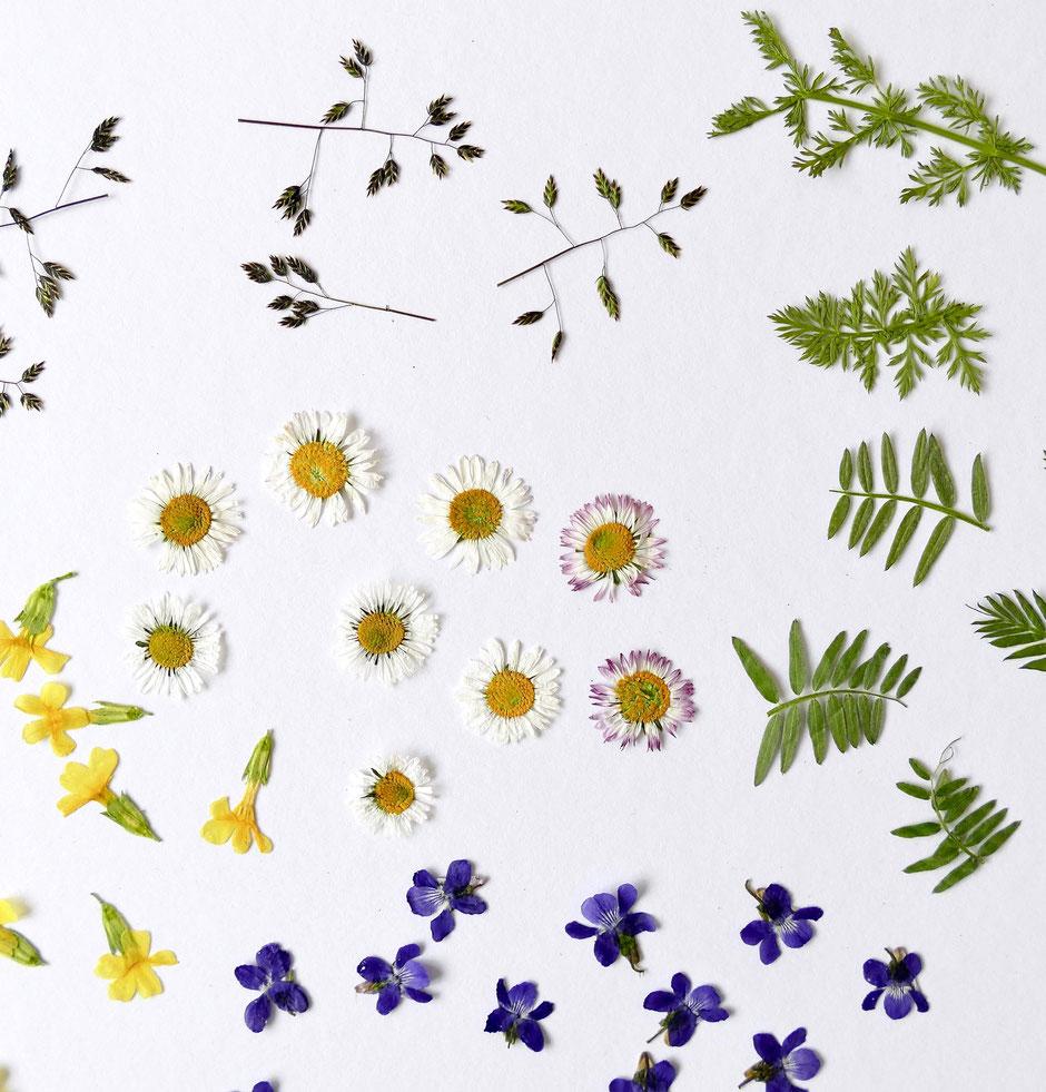 Getrocknete Blumen aus der Mikrowelle