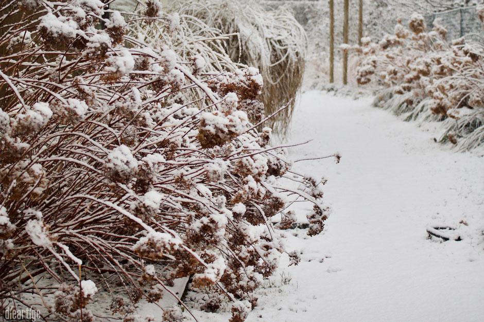 dieartigeBLOG - Stapfen durch den Wintergarten, der Weg zum Haus mit Hortensien + Gräser