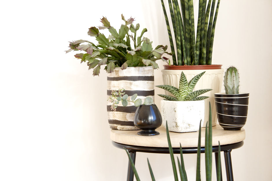 dieartigeBLOG - Wohnidee Grünpflanzen
