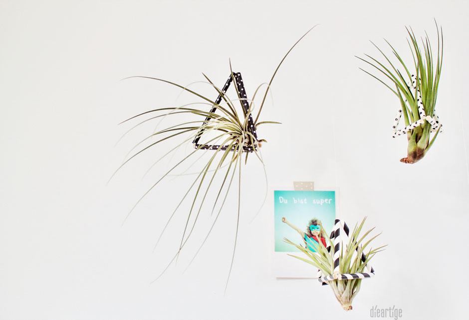 dieartigeBLOG - DIY / Wohnidee Schwebende Grünpflanzen / Tillandsien