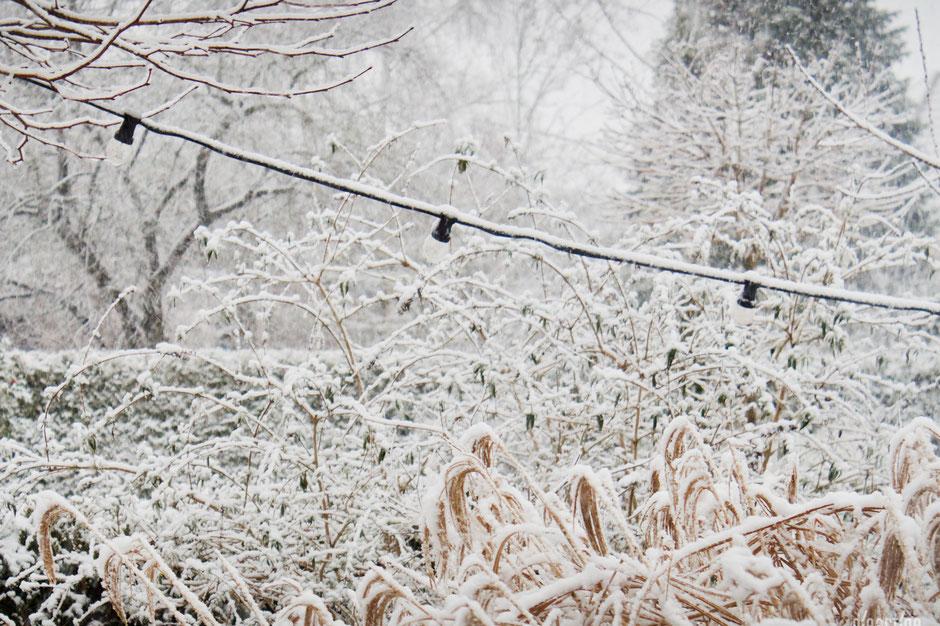 dieartigeBLOG - Schnee im Wintergarten - Chinaschilf+Lichterkette