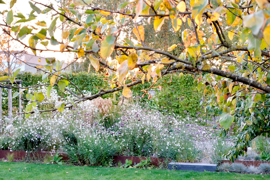 dieartigeGARTEN - Oktobergarten 2018 | Steppenbeet mit Gaura,Eisenkraut, Aster und Gräsern