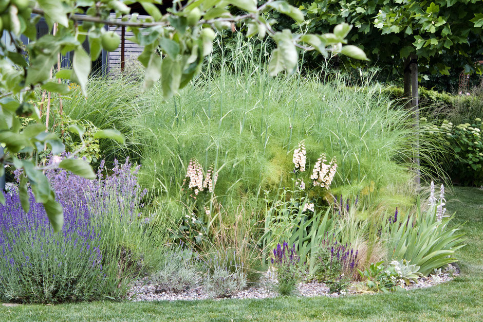 dieartigeGARTEN - Junigarten 2018 | Kiesbeet mit Gartenfenchel, Lavendel, Fingerhut, Katzenminze + Ziersalbei