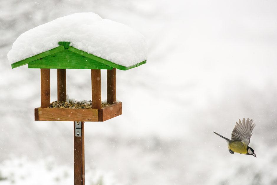 Blaumeise, Meise, Futterhaus, Vogelfutter, Schnee