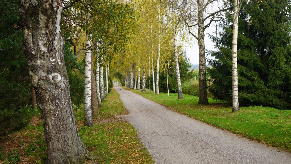 Birkenallee mit 2 Kilometer Länge - Joensuu Kartano