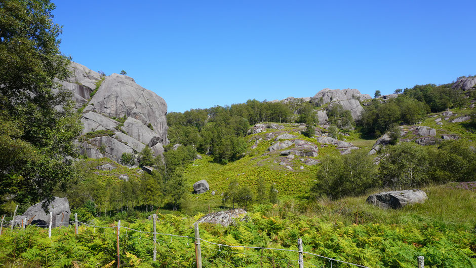 Etwas Grün gibt es zwischen den Felsen immer