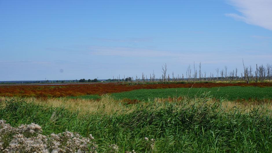 Farbig bute Moorlandschaft