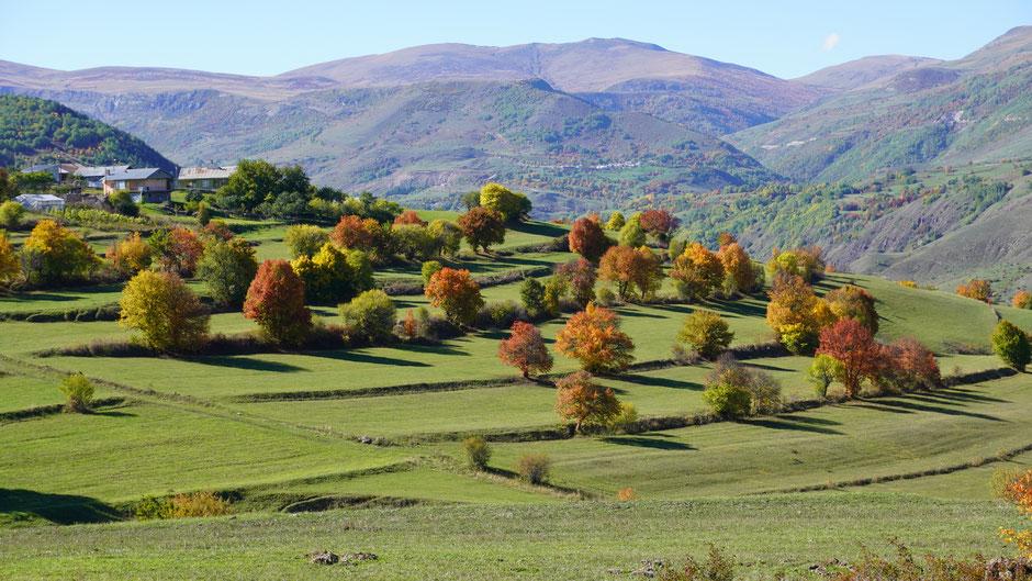 Terrassenlandschaft in Herbstfarben