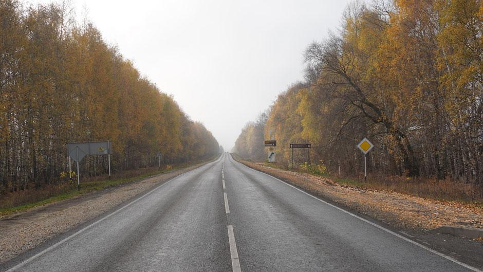 Kein Verkehr, geradeaus, Birken als Allee