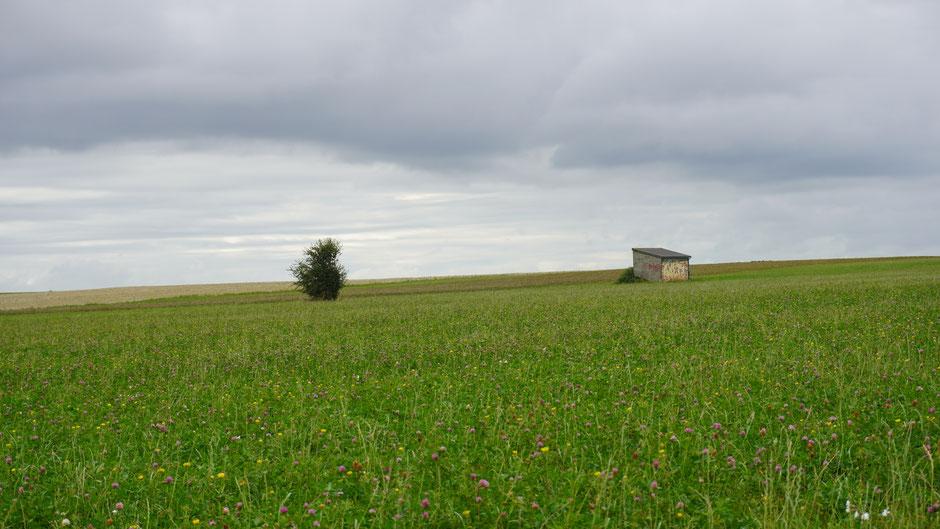 Stehen etwas verloren in der Landschaft ...