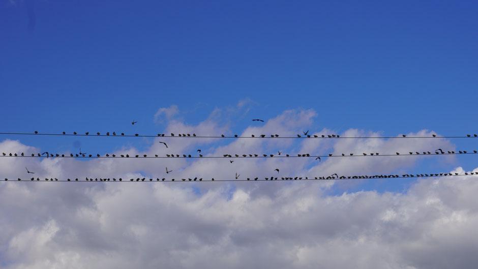 Lagebesprechung in der Höhe - es geht um Abstandsregeln und Flugbeschränkungen ...