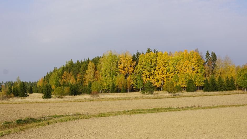 Acker und Wald, in den Trendfarben des Herbstes