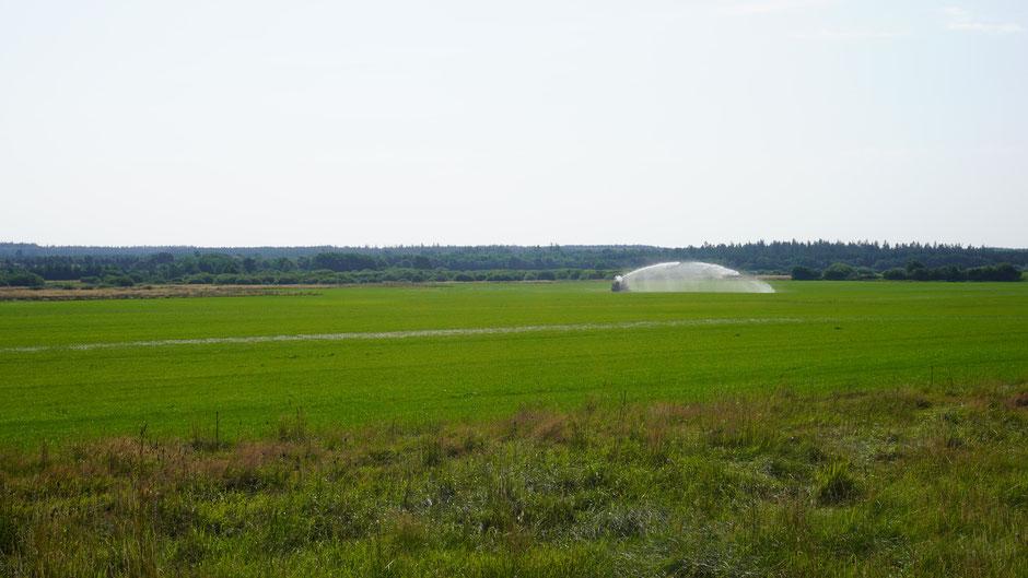Große Felder brauchen große Werfer