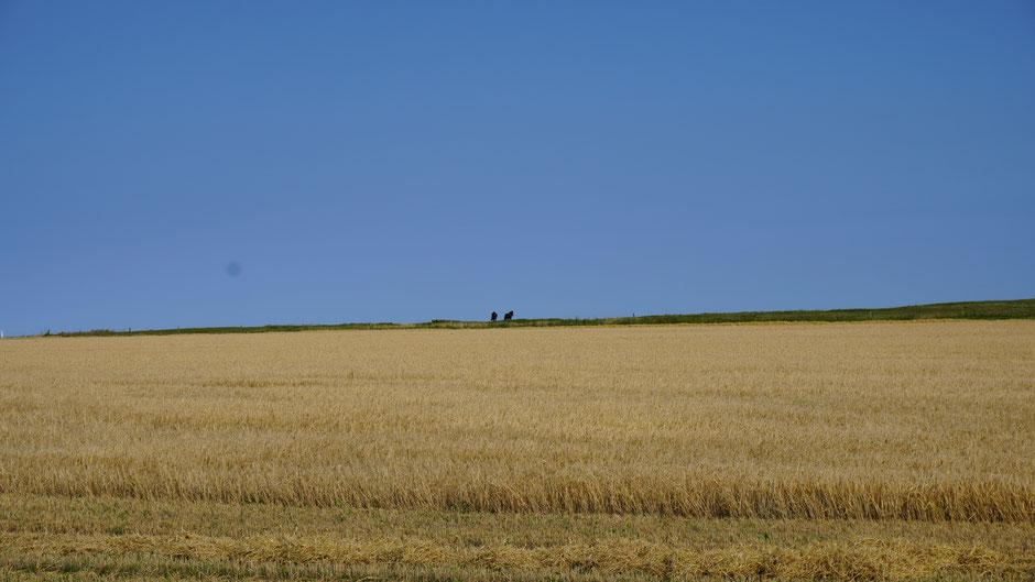 Pferde genießen die Weite und die frische Brise am Hügel