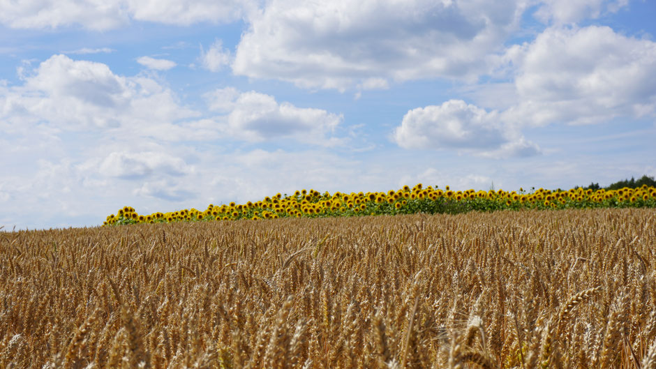 Gelbe i-Tüpfelchen in der Landschaft