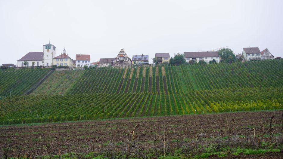 Weinbau in Nebelhanglage