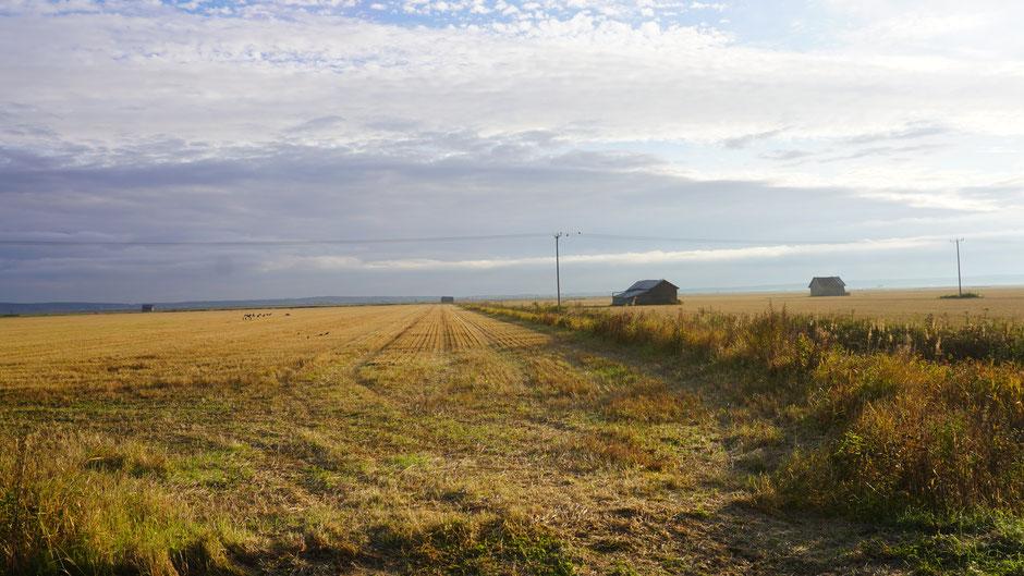 Nasse Getreidefelder, doch die Hälfte ist schon im Trockenen ...