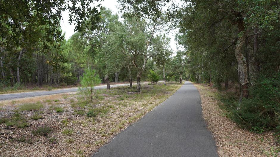 Korkrinde - bei einigen Bäumen schon abgeschält