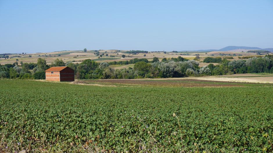 In Griechenland zeigt sich die Landschaft gleich weiter. Und Baumwollfelder gibt es auch