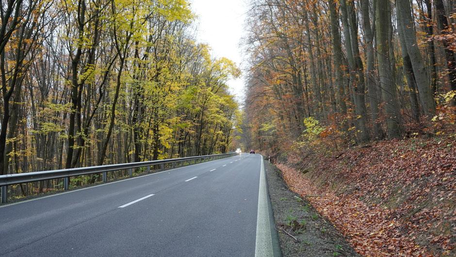 Meine Route führt mich heute immer wieder durch feine Laubwälder