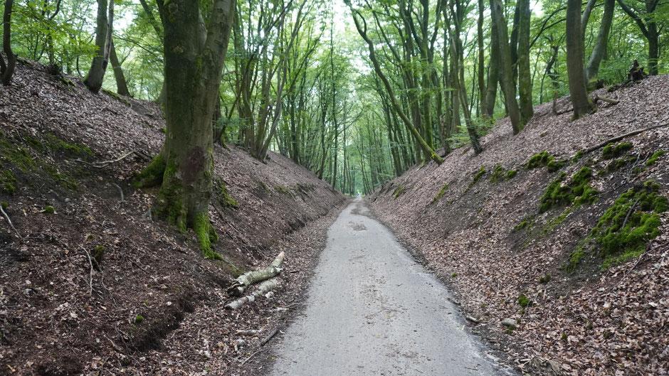 Downhill im Naturpark