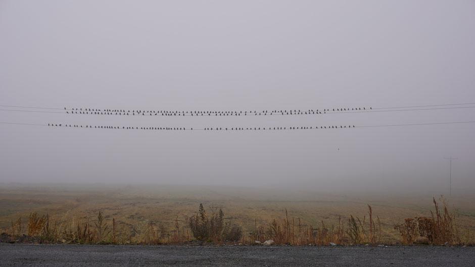 Kein Flugwetter heute: Nebel und nur 4 Grad