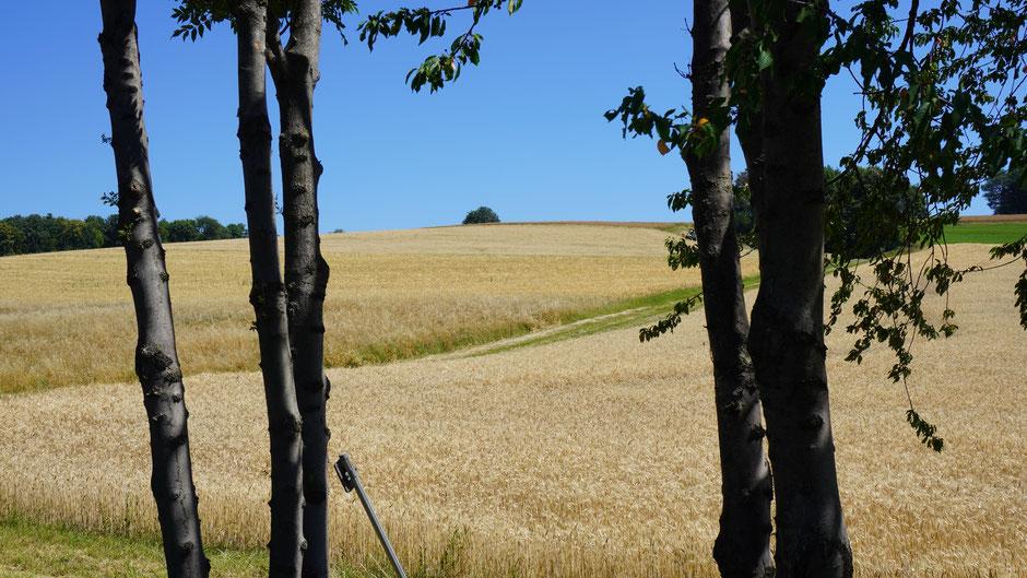 Landschaftsfenster mit Ausblick auf Kornfeld und blauen Himmel