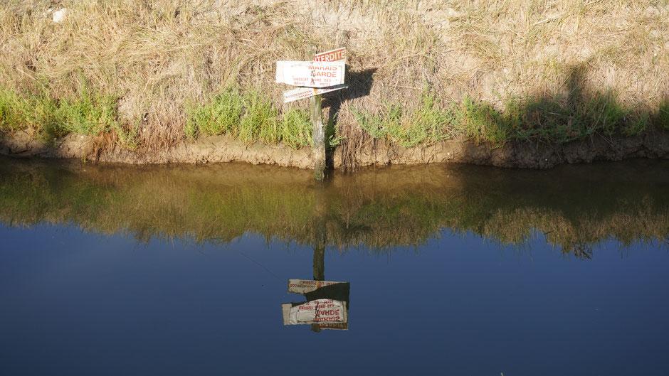 Spiegelschrift für die Fische ...