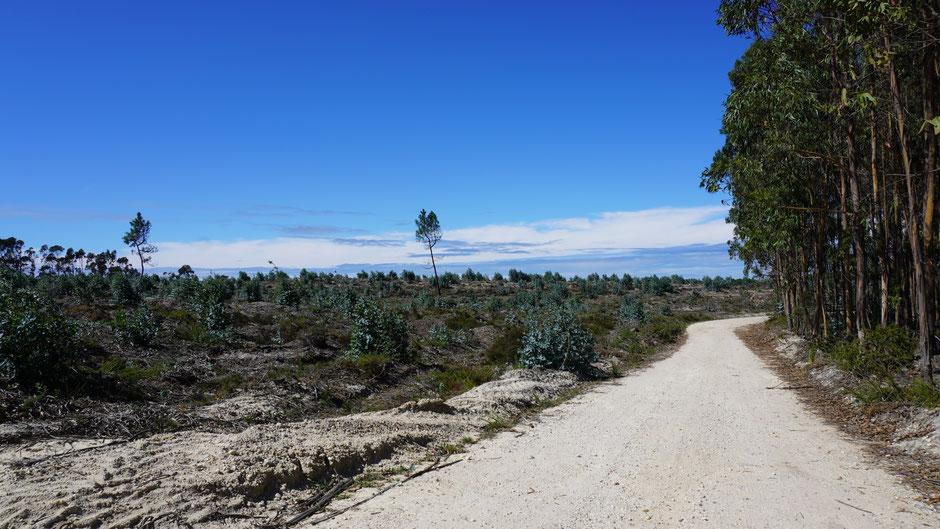 Durch den Eukalyptuswald ins Blaue ...