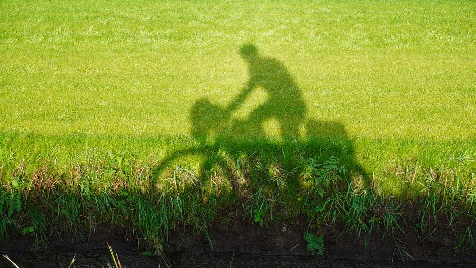 Fahrt im Grünen