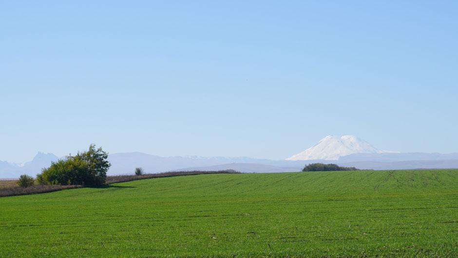 Egal welcher Vordergrund, der Elbrus schaut einfach gut aus