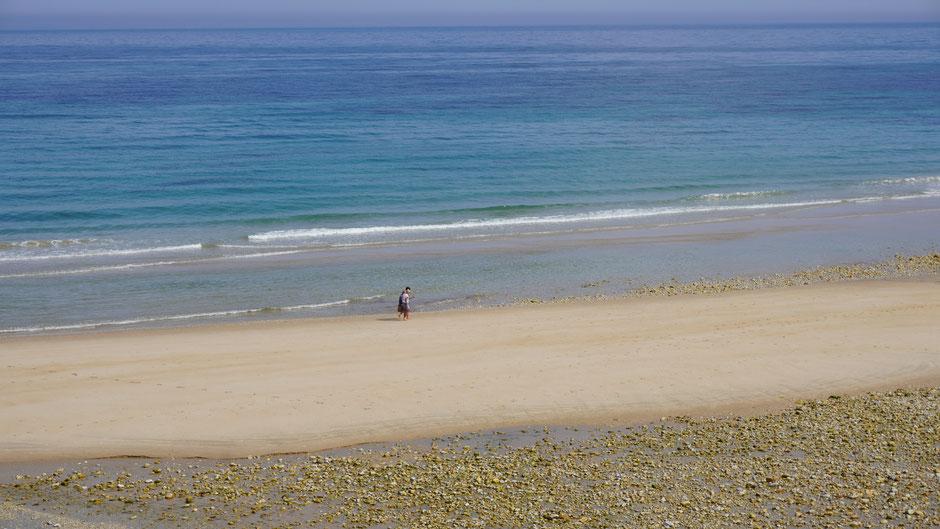Einsame Strandläufer ...