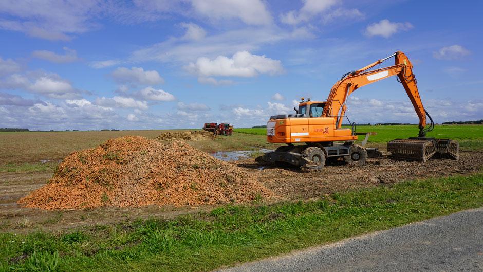Biogemüseanbau - sogar der Bagger ist farblich auf das Erntegut abgestimmt