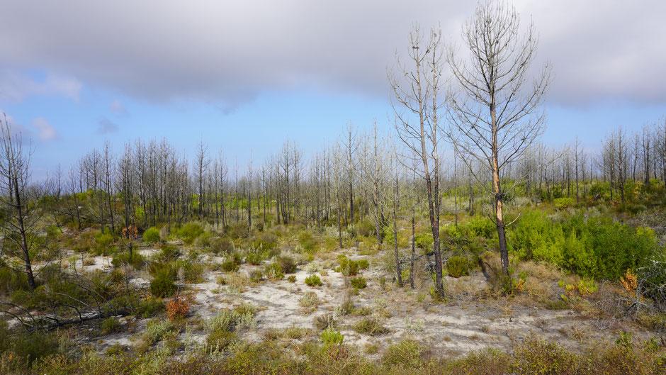Landschaft nach Waldbrand