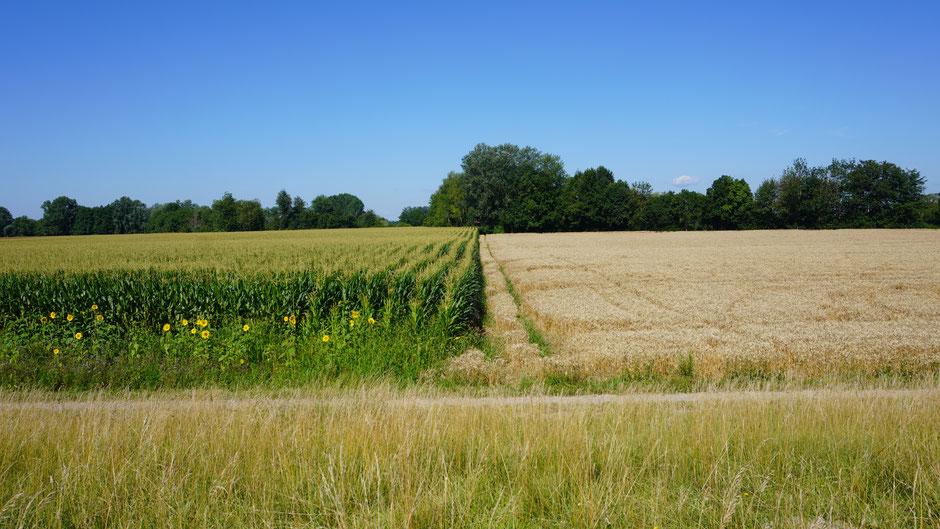 Geteiltes Land mit üppigem Anbau