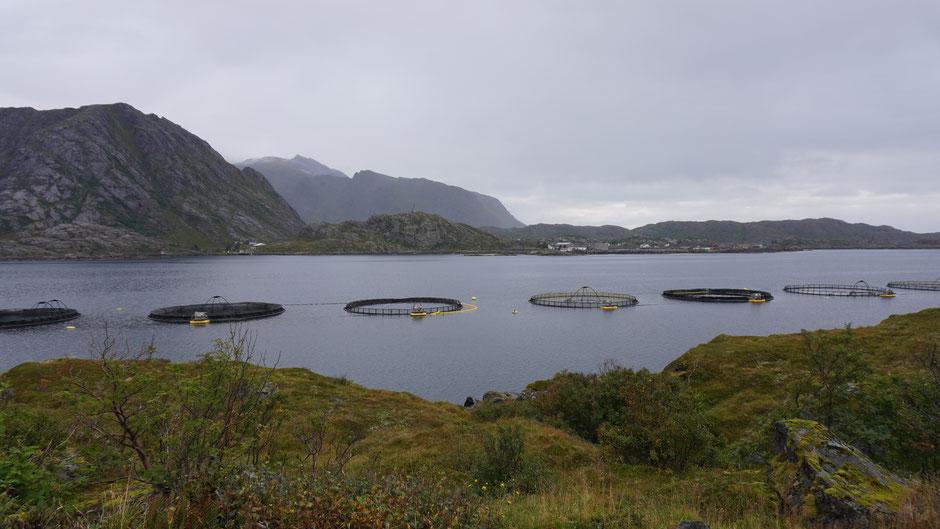 Fischfarm im Fjord
