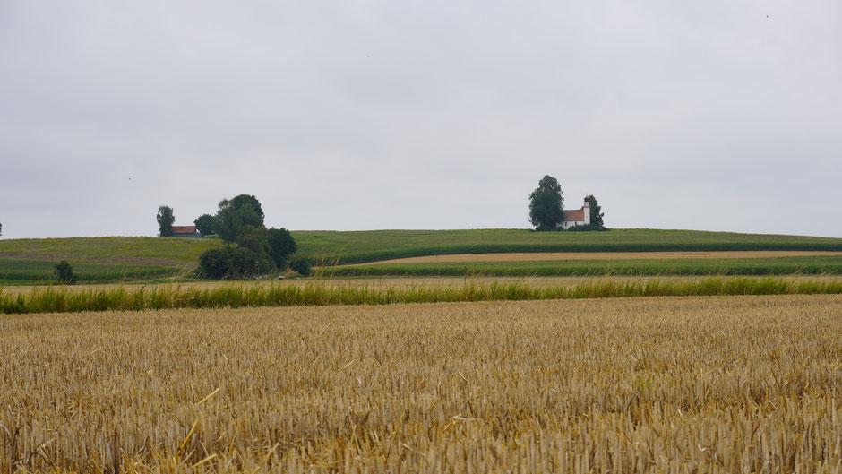 Kirche im Feld - es wächst und gedeiht rundum ...