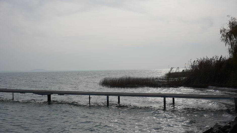 Gegenlichtstimmung am Ufer