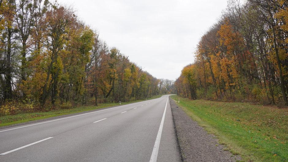Herbststimmung mit nebelgrauem Himmel