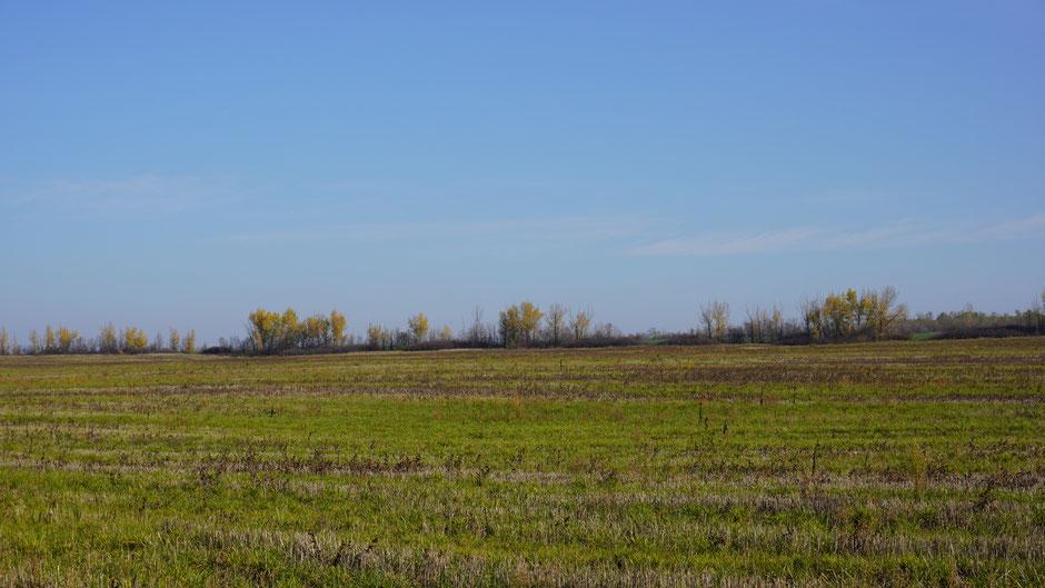 Schmale, bunte Baum- und Gebüschstreifen grenzen die Anbauflächen ab