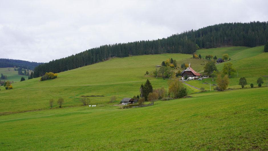 Schwarzwald im Original
