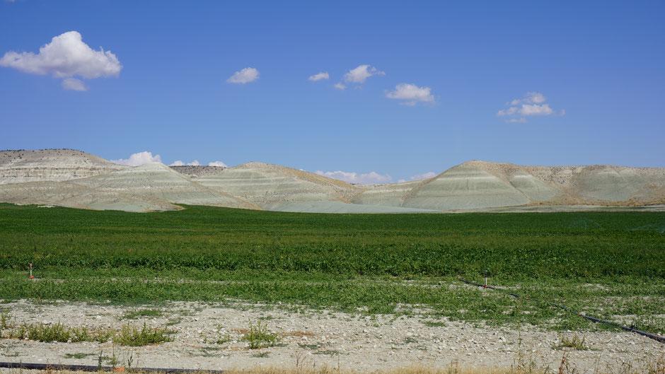 Die grünen Felder sind riesengroß